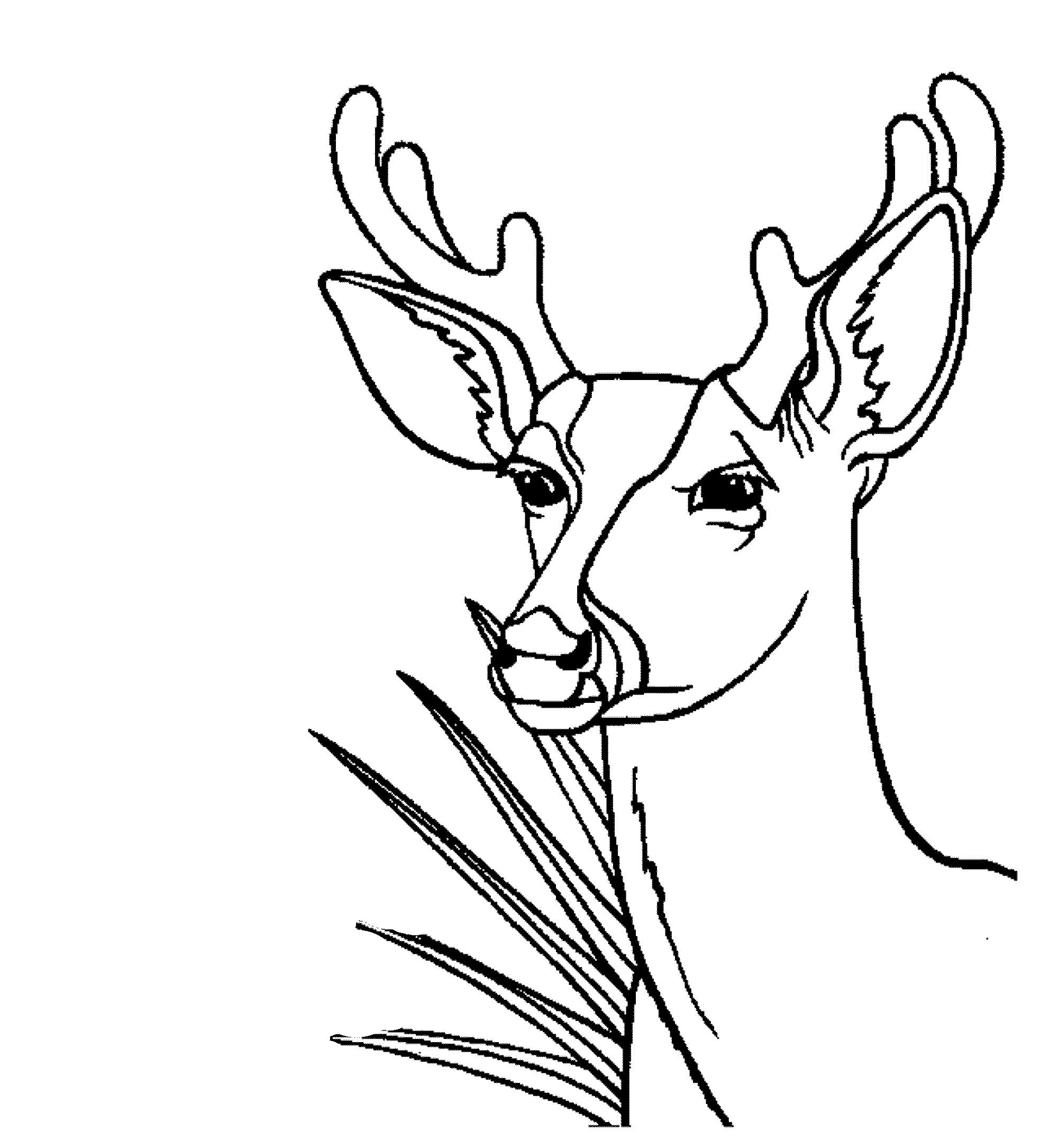 deer coloring sheet print download deer coloring pages for totally sheet deer coloring