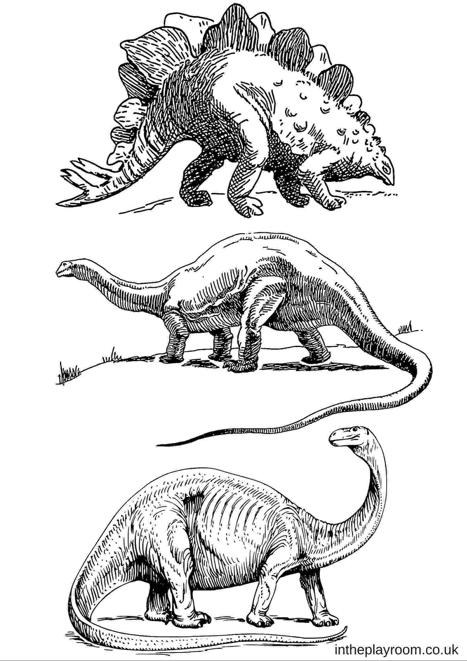 dinosaur color page dinosaur colouring pages in the playroom color dinosaur page