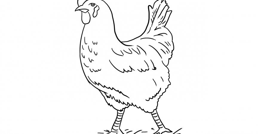 dltk coloring pages farm animals rooster coloring page learn about nature dltk pages farm animals coloring