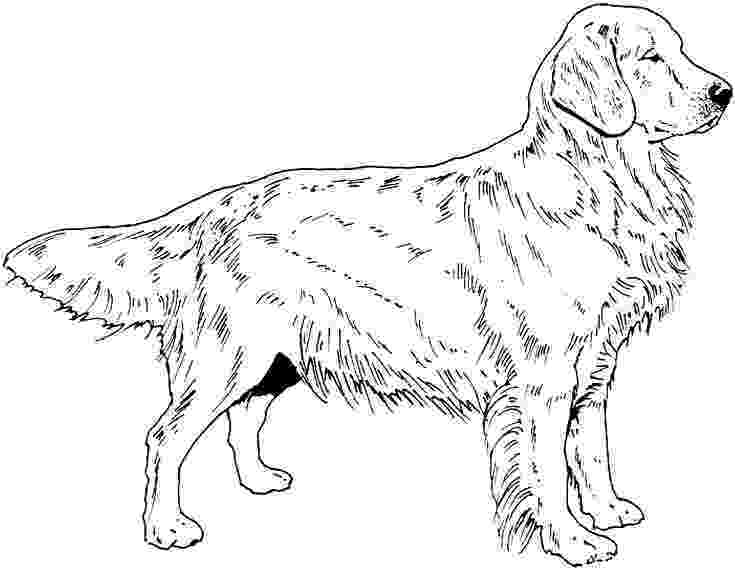 dog breeds coloring pages dog breed coloring pages breeds dog pages coloring 1 2