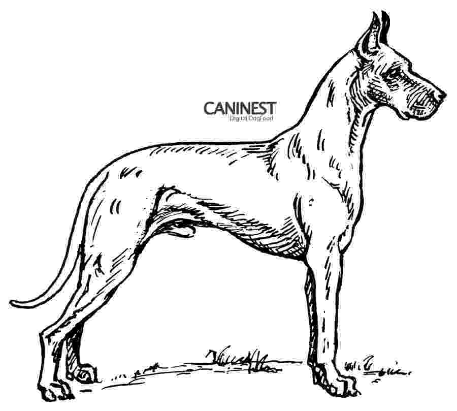 dog breeds coloring pages dog breed coloring pages coloring breeds pages dog