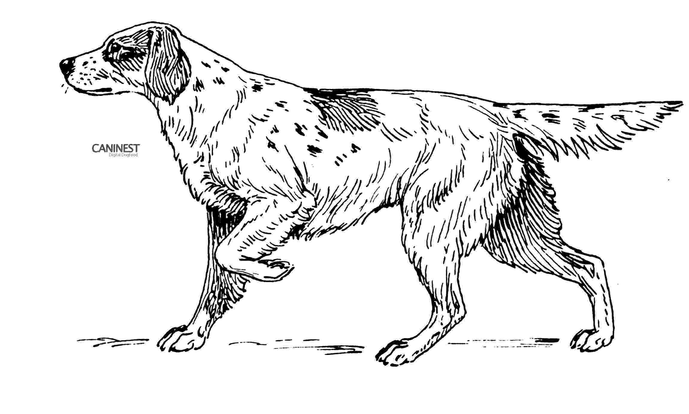dog breeds coloring pages dog breed coloring pages coloring dog pages breeds