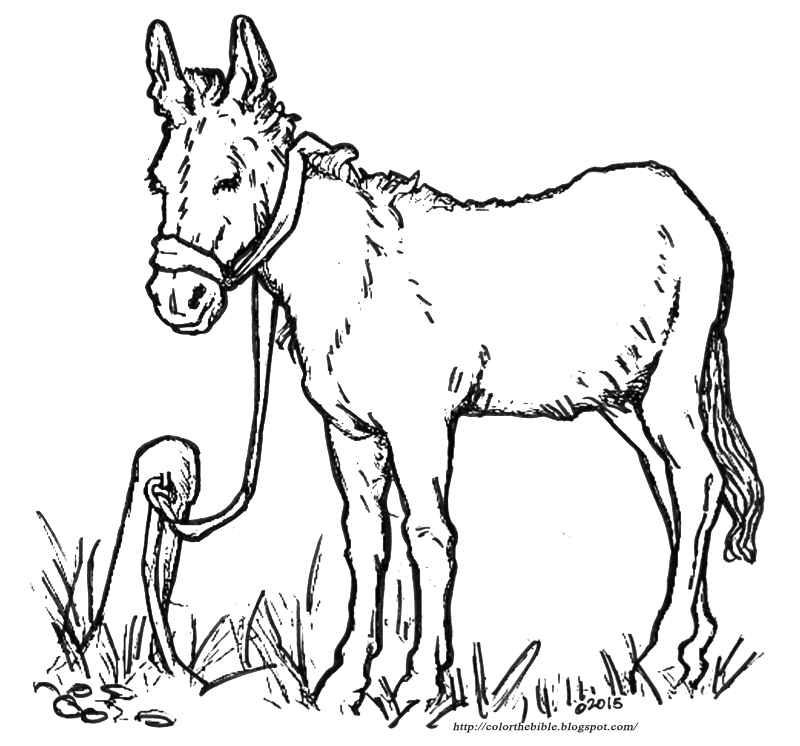 donkey pictures to colour color this donkey for easter color the bible to donkey pictures colour