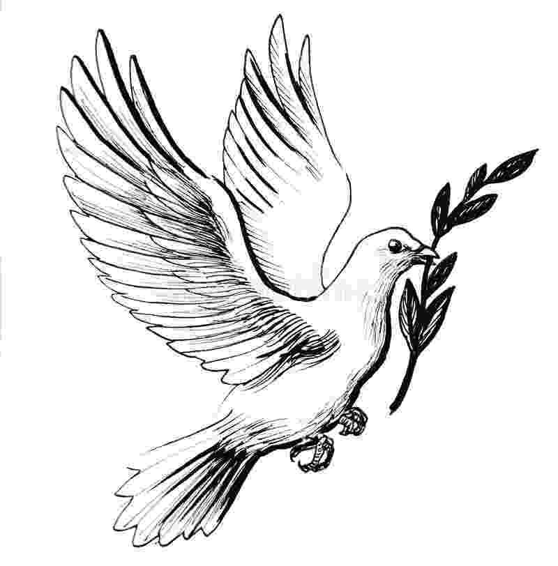 dove holding olive branch dove stock illustrations 34774 dove stock illustrations holding olive dove branch