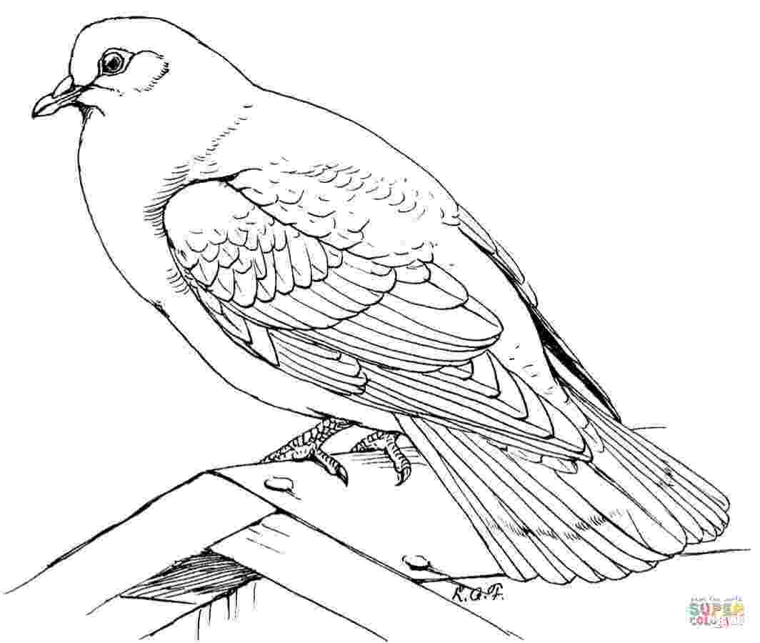 doves coloring pages turtle doves coloring pages coloring home coloring doves pages 1 1