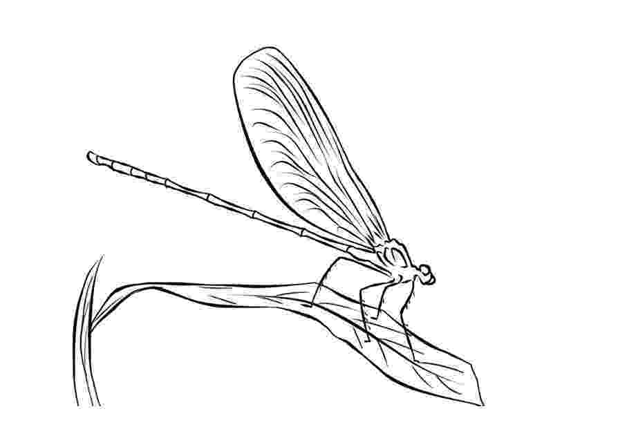 dragonfly coloring free printable dragonfly coloring pages for kids animal dragonfly coloring 1 4