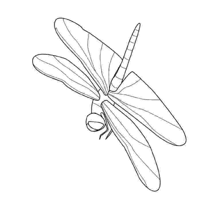 dragonfly coloring free printable dragonfly coloring pages for kids coloring dragonfly 1 3