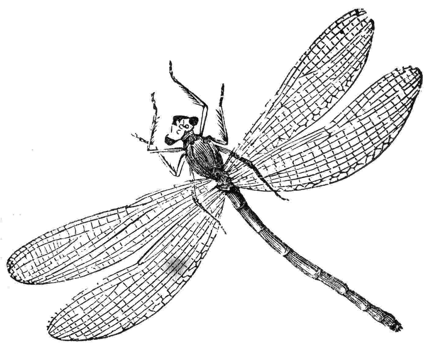 dragonfly coloring free printable dragonfly coloring pages for kids coloring dragonfly 1 4