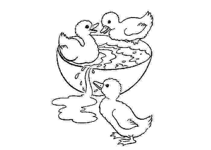 duck color sheet ducks coloring pages to download and print for free sheet duck color