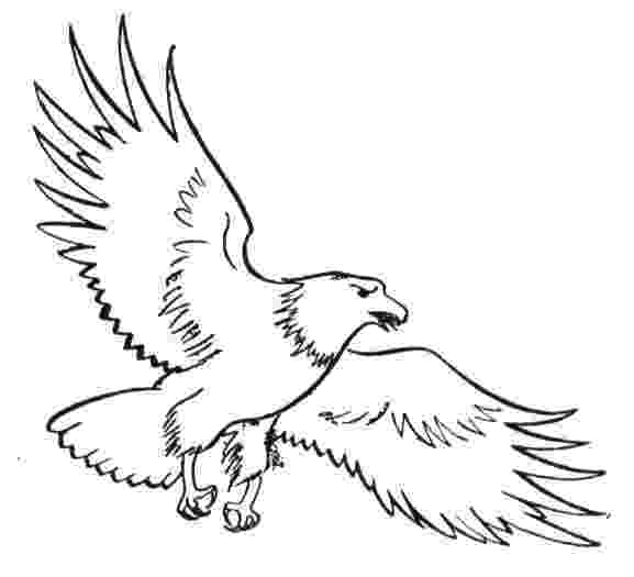 eagle pictures to color free eagle coloring pages color eagle to pictures