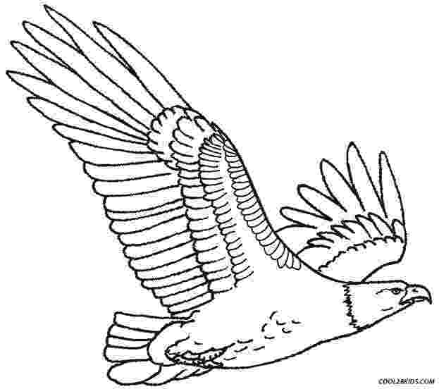 eagle pictures to color free eagle coloring pages color to eagle pictures