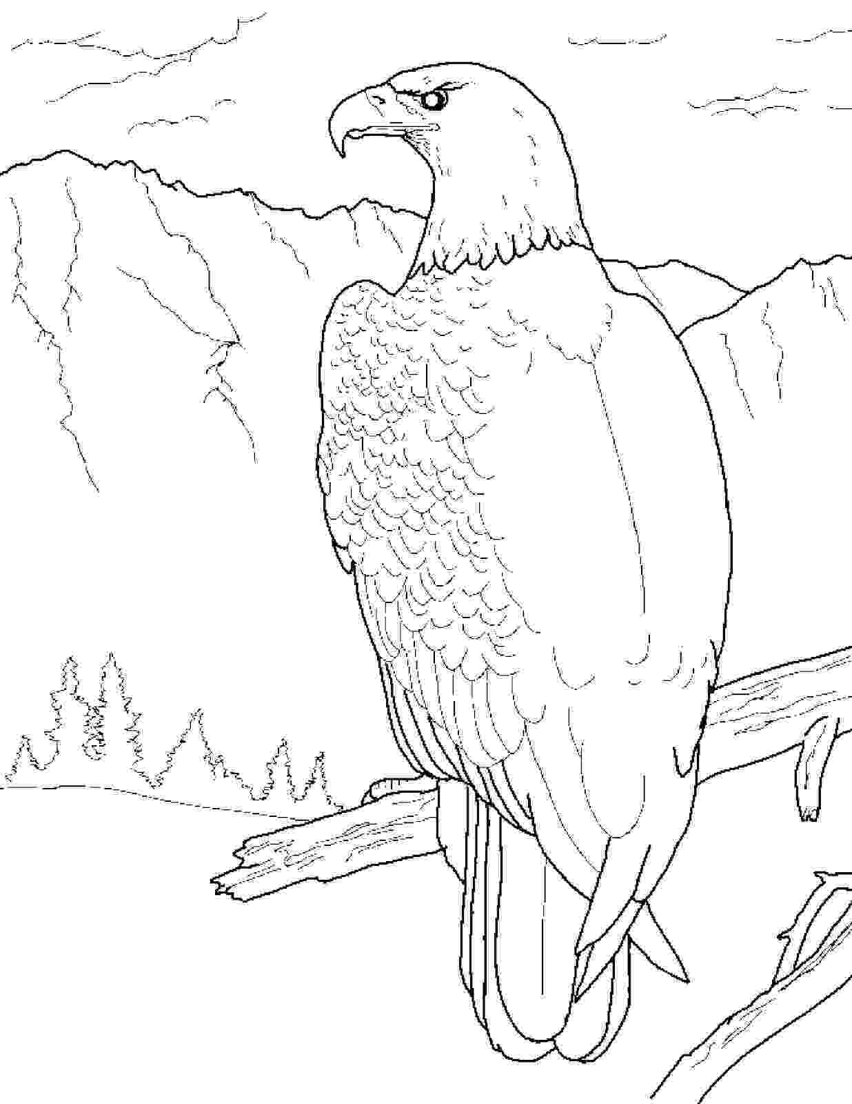eagle pictures to color free eagle coloring pages eagle pictures color to