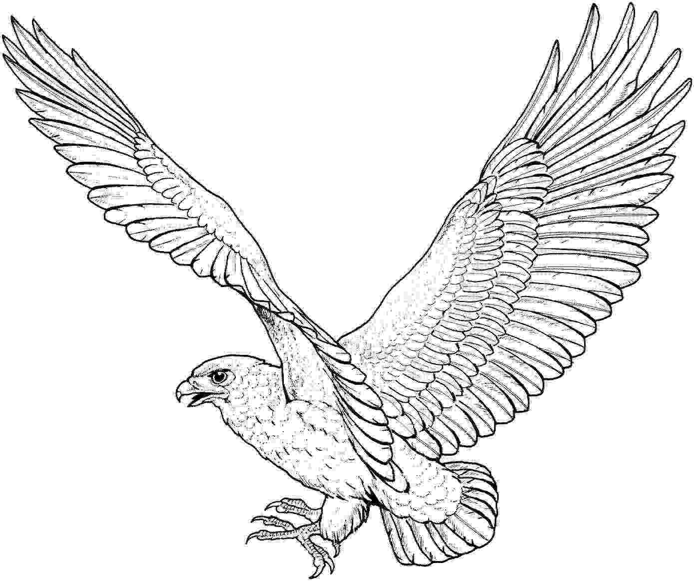 eagle pictures to color free eagle coloring pages eagle to color pictures