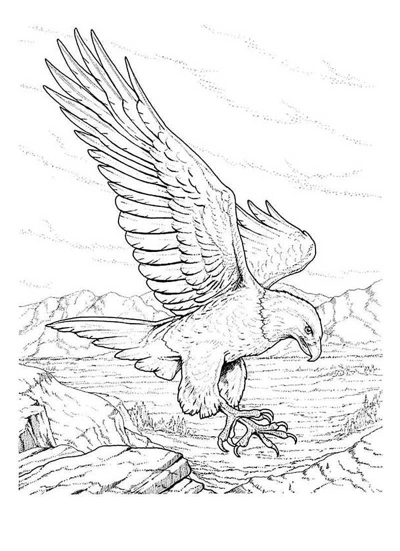 eagle pictures to color free printable eagle coloring pages for kids to eagle pictures color