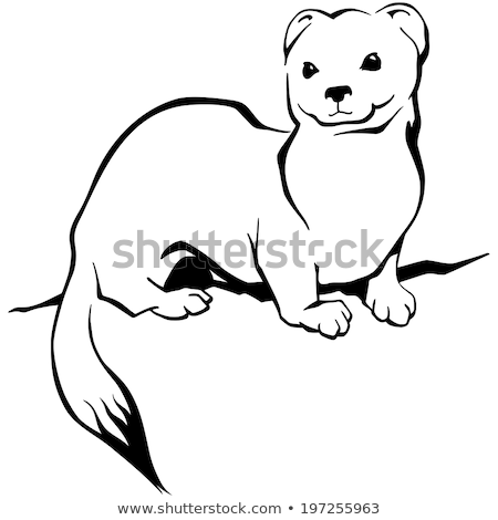 ermine color animal coloring pages page 16 animals town color ermine