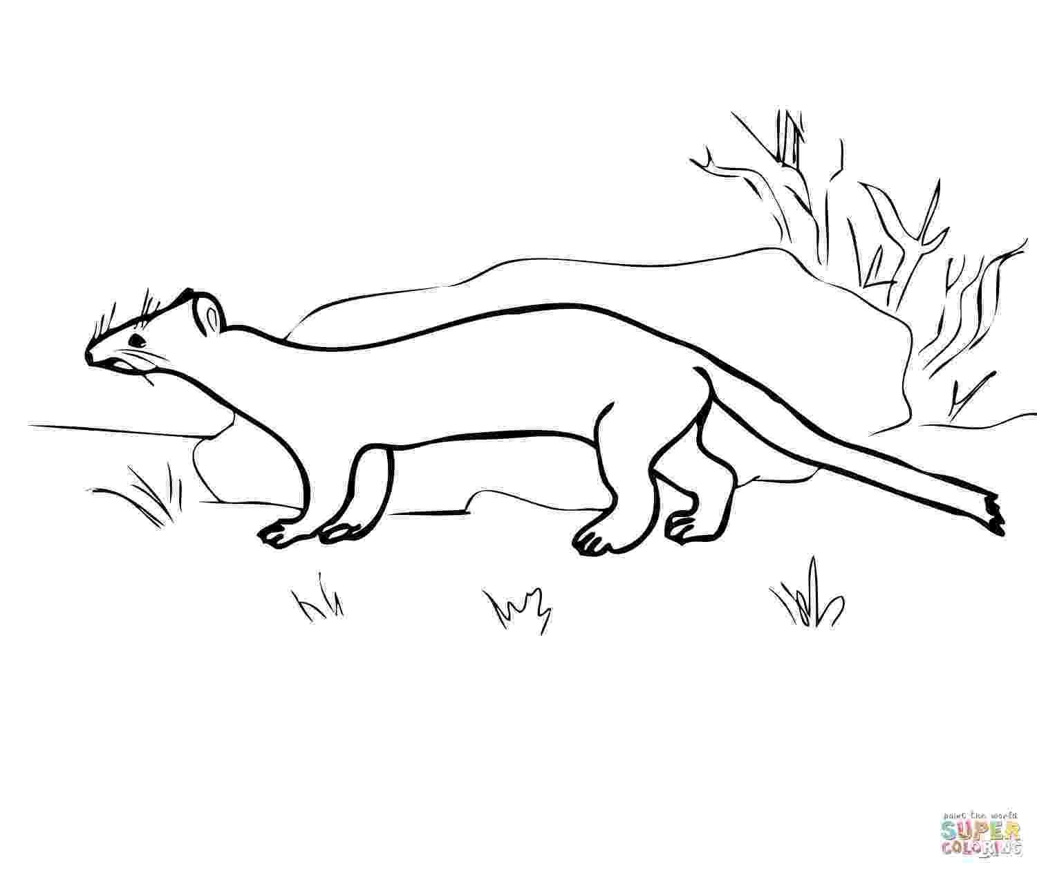 ermine color ermine coloring page animals town free ermine color sheet ermine color