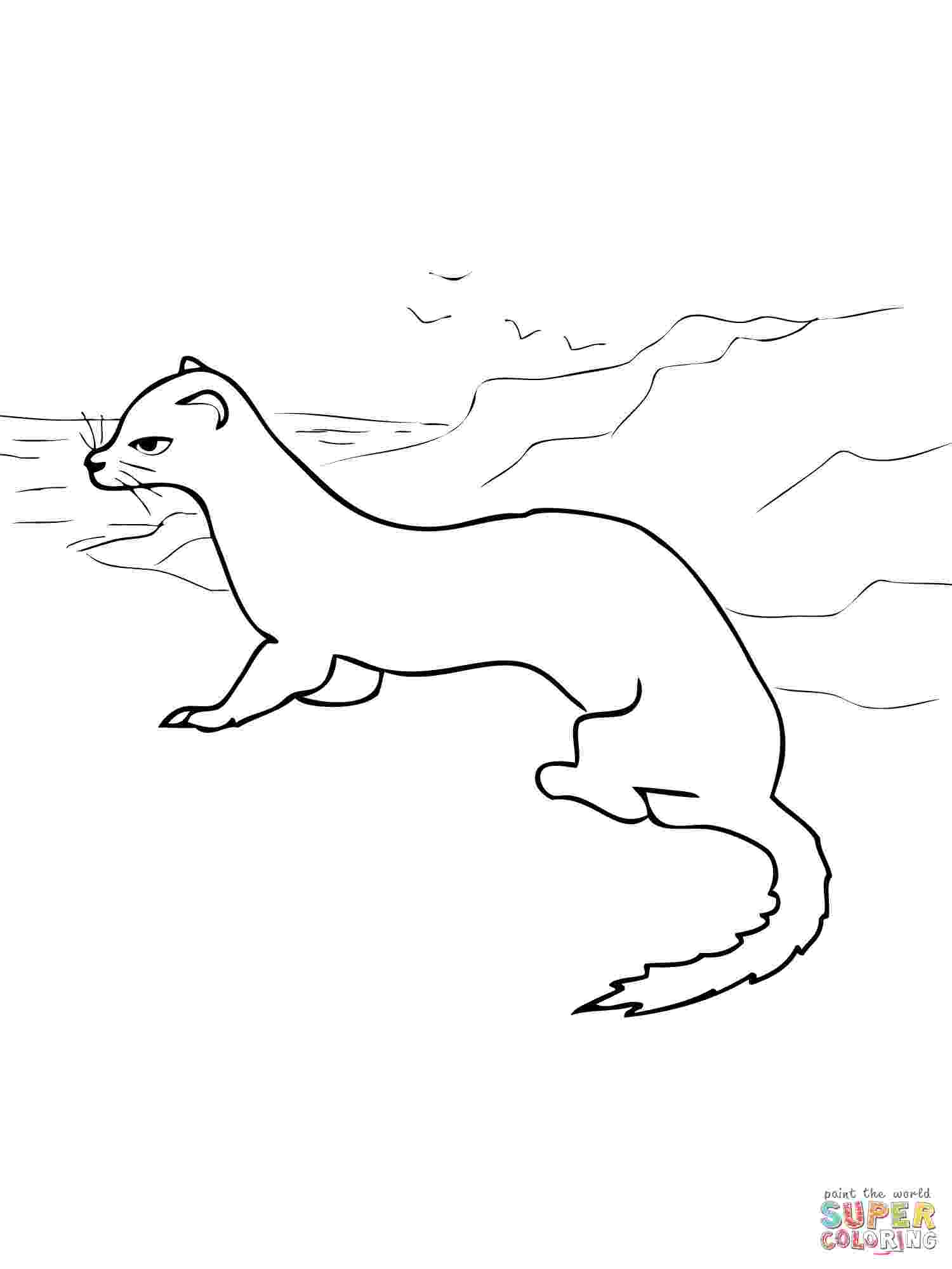 ermine color ermine coloring pages download and print for free color ermine