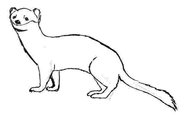 ermine color ermine coloring pages download and print for free color ermine 1 2