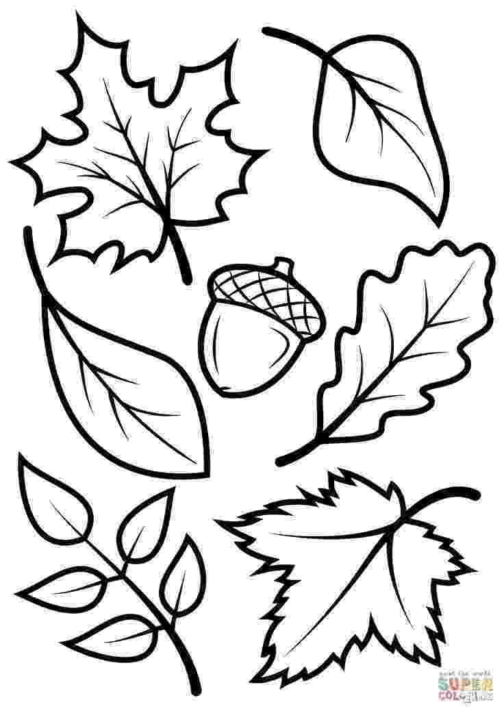 fall leaves print out fall leaves and acorn coloring page from fall category fall leaves print out