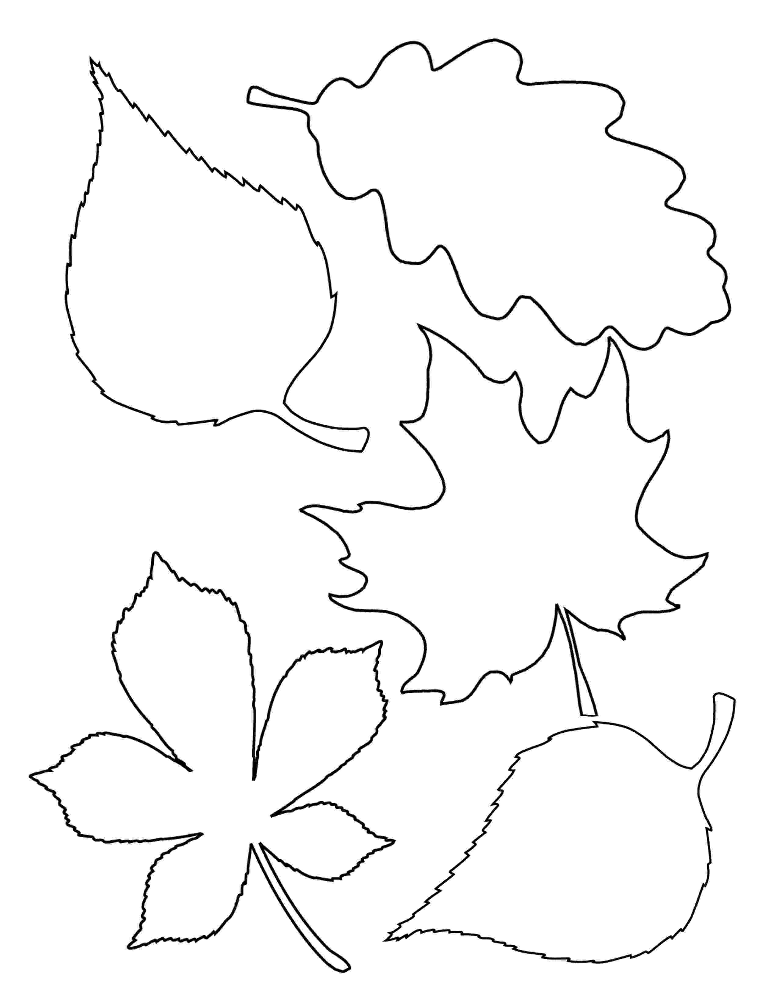 fall leaves print out living felt contact us fall out print leaves