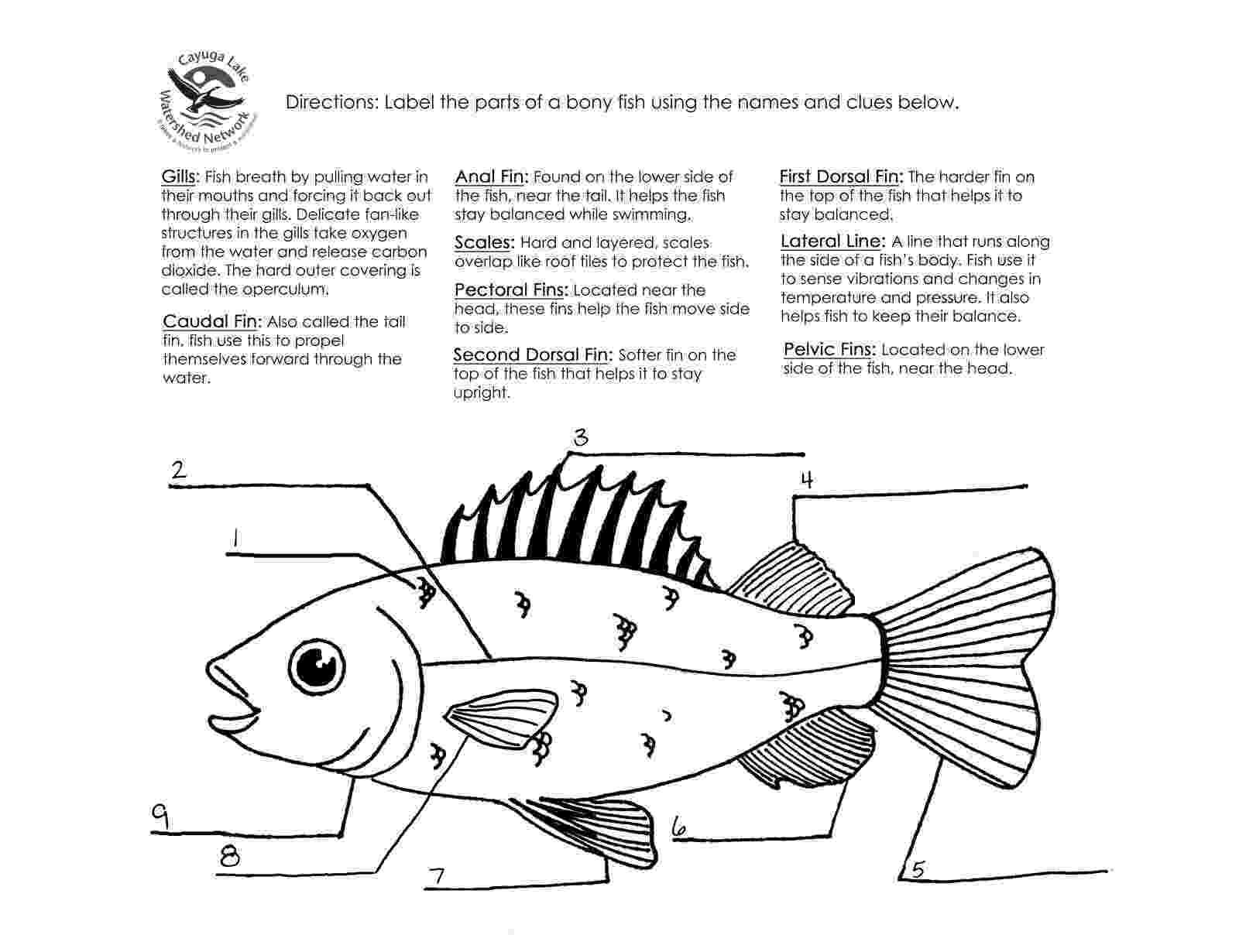 fish coloring worksheet color the fish worksheet d39nealian twisty noodle coloring fish worksheet