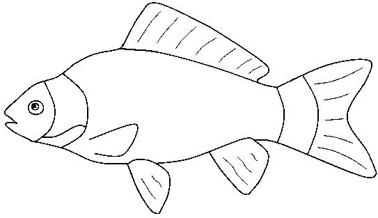 fish coloring worksheet fish coloring pages for preschool preschool and kindergarten worksheet coloring fish 1 1