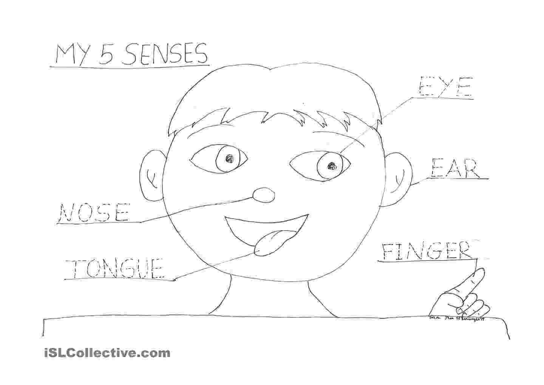 five senses coloring pages the five senses coloring sheets pinterest preschool five coloring pages senses