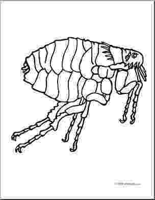 flea coloring page flea coloring page animals town animals color sheet page coloring flea