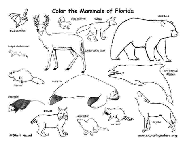 florida coloring page florida coastal animals coloring page florida page coloring