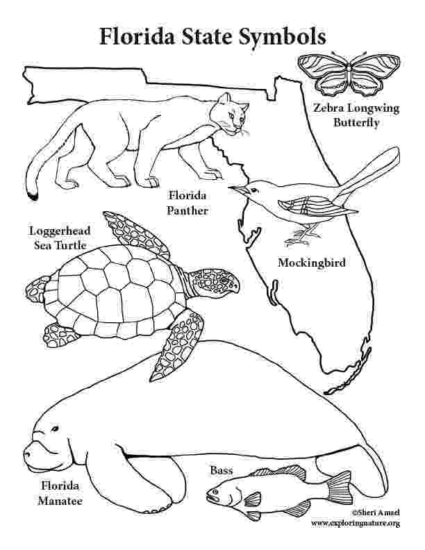 florida state symbols coloring pages florida state symbols coloring pages florida symbols florida state symbols coloring pages