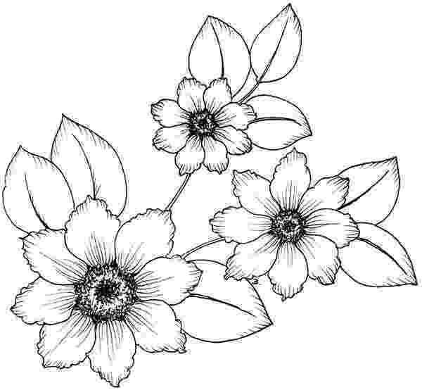 flowers you can print and color 500 best images about floral coloring pages for adults on you and flowers print color can