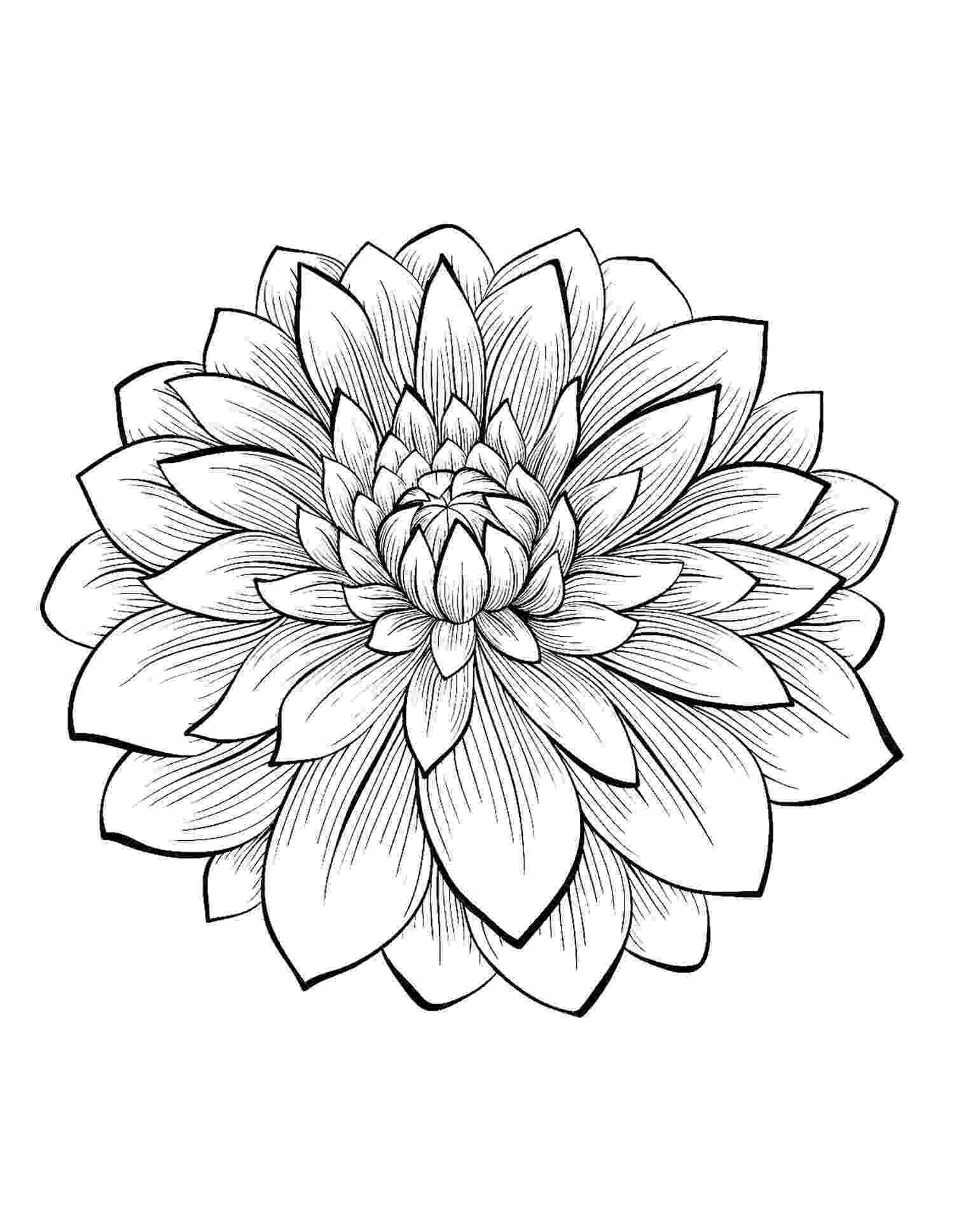 flowers you can print and color dahlia color one of the most beautiful flowers from the you print flowers color can and