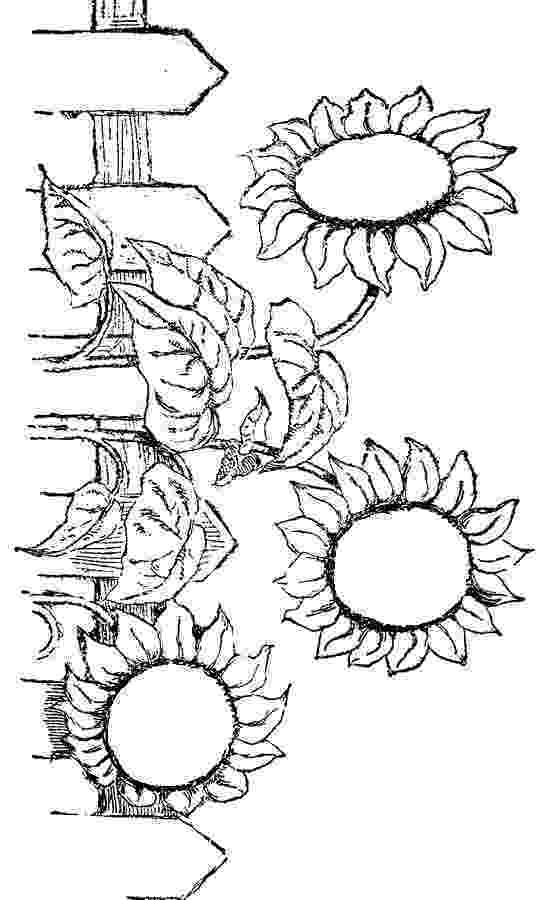 flowers you can print and color free coloring pages that you can print coloring sun and you can flowers and color print
