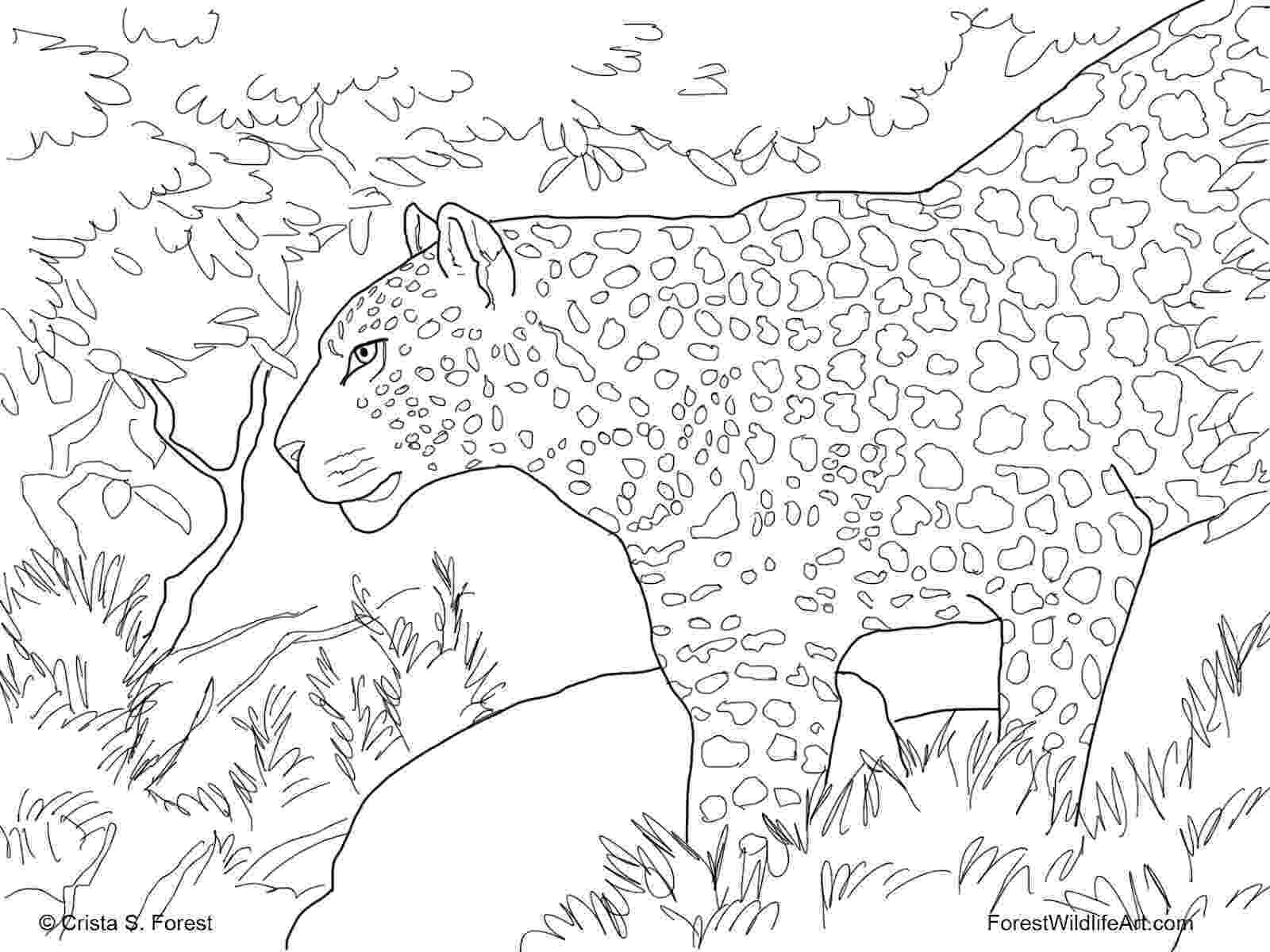 forest coloring sheets forest coloring pages download and print forest coloring sheets forest coloring