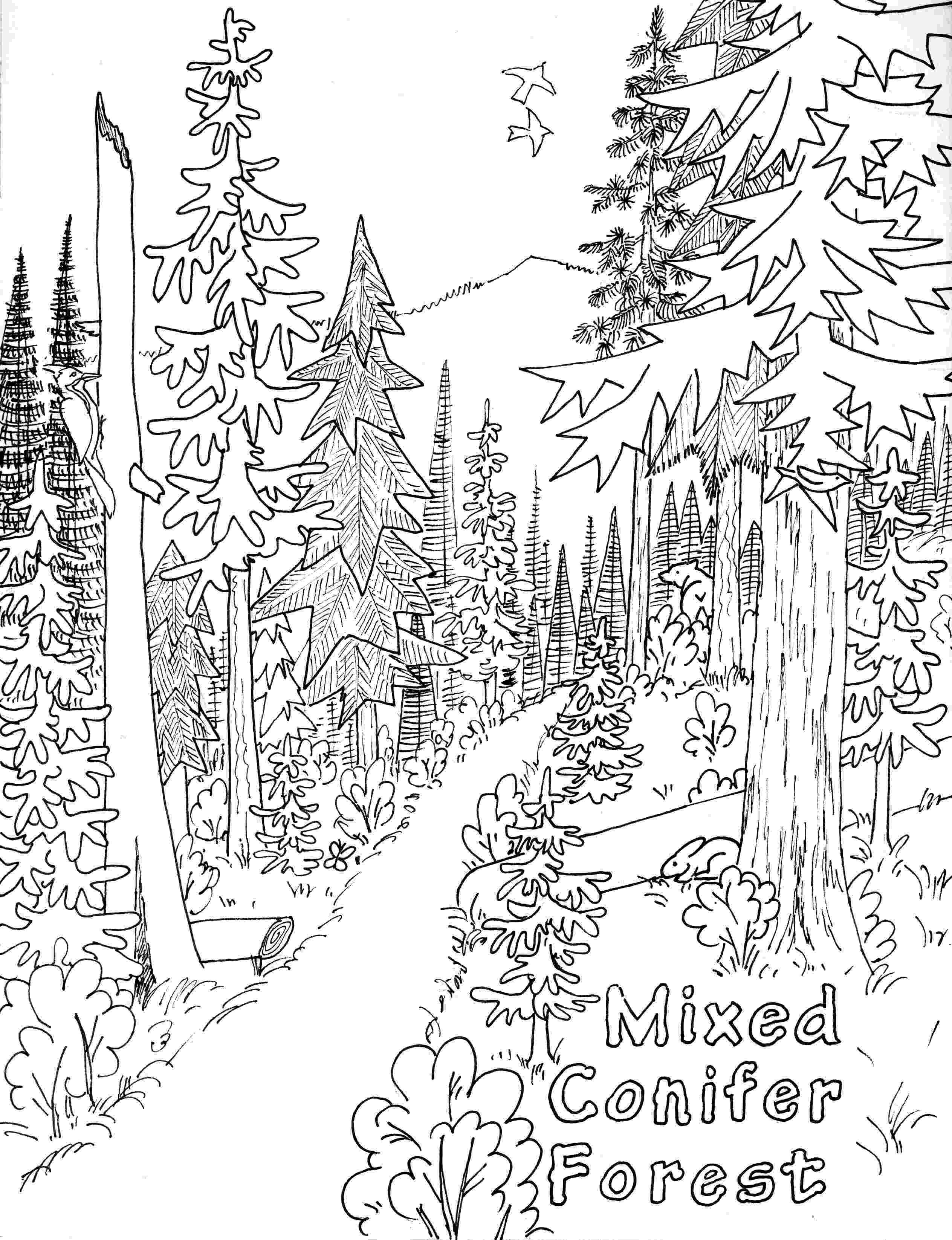 forest coloring sheets free printable nature coloring pages for kids best forest sheets coloring