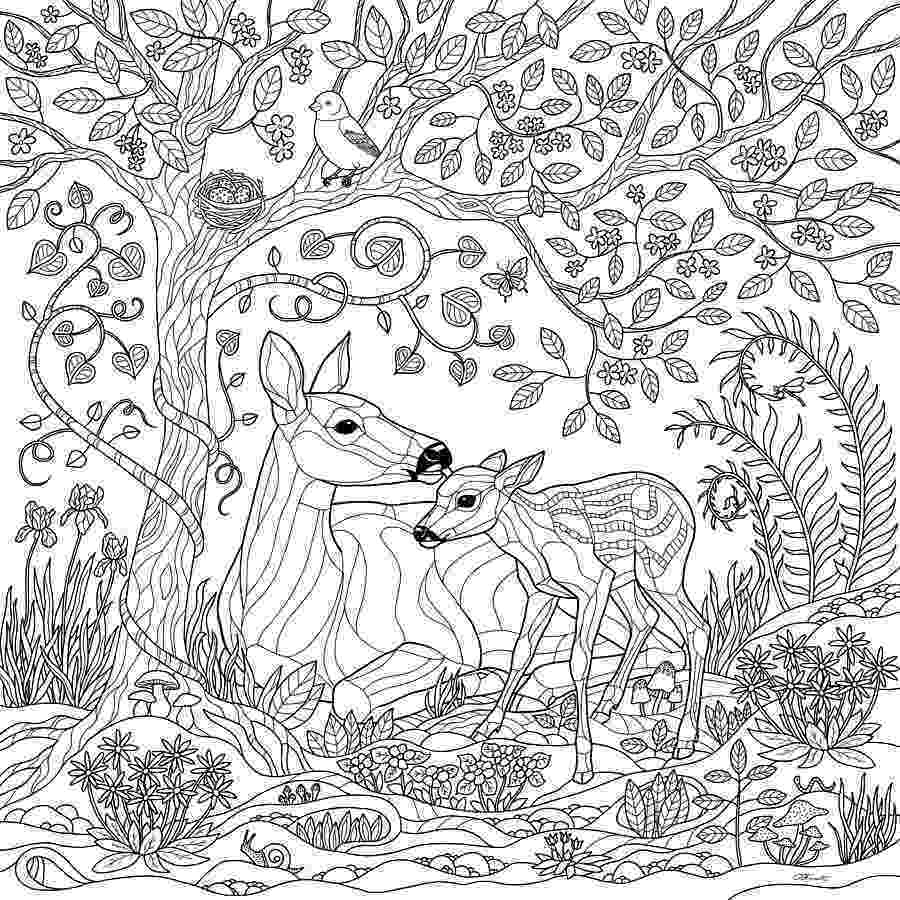 forest coloring sheets rain forest trees coloring page coloring home forest sheets coloring