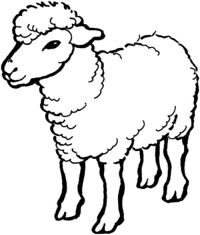 fotos de ovejas para imprimir desenho de ovelha comum para colorir colorircom de fotos ovejas imprimir para
