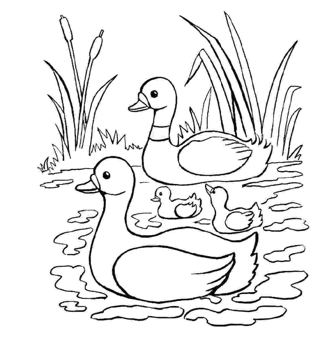 fotos de patos para colorear donald duck drawing how to draw donald duck easy fotos de para patos colorear
