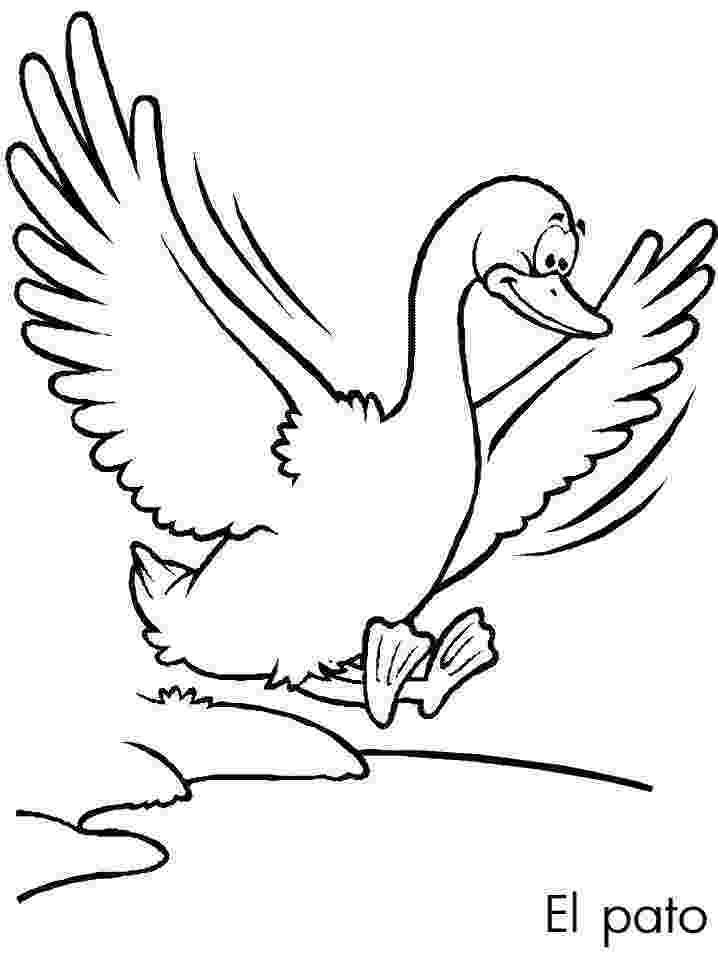fotos de patos para colorear pato y patos imágenes y fotos de patos dibujos cacería patos fotos para colorear de