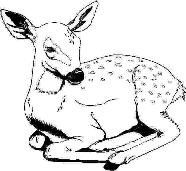free animal colouring book 30 free coloring pages a geometric animal coloring animal colouring free book