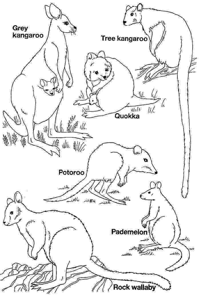 free australian colouring pages australian animal template animal templates free colouring pages australian free