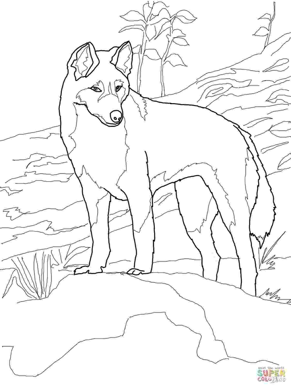 free australian colouring pages dingo from australia coloring page supercoloringcom colouring free pages australian