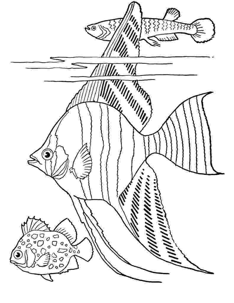 free coloring pages adults online free printable adult coloring page tropical fish the free online adults coloring pages