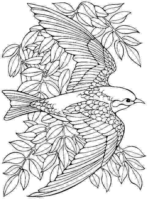 free coloring pages birds bird coloring pages for adults page of a bird in spring free pages birds coloring