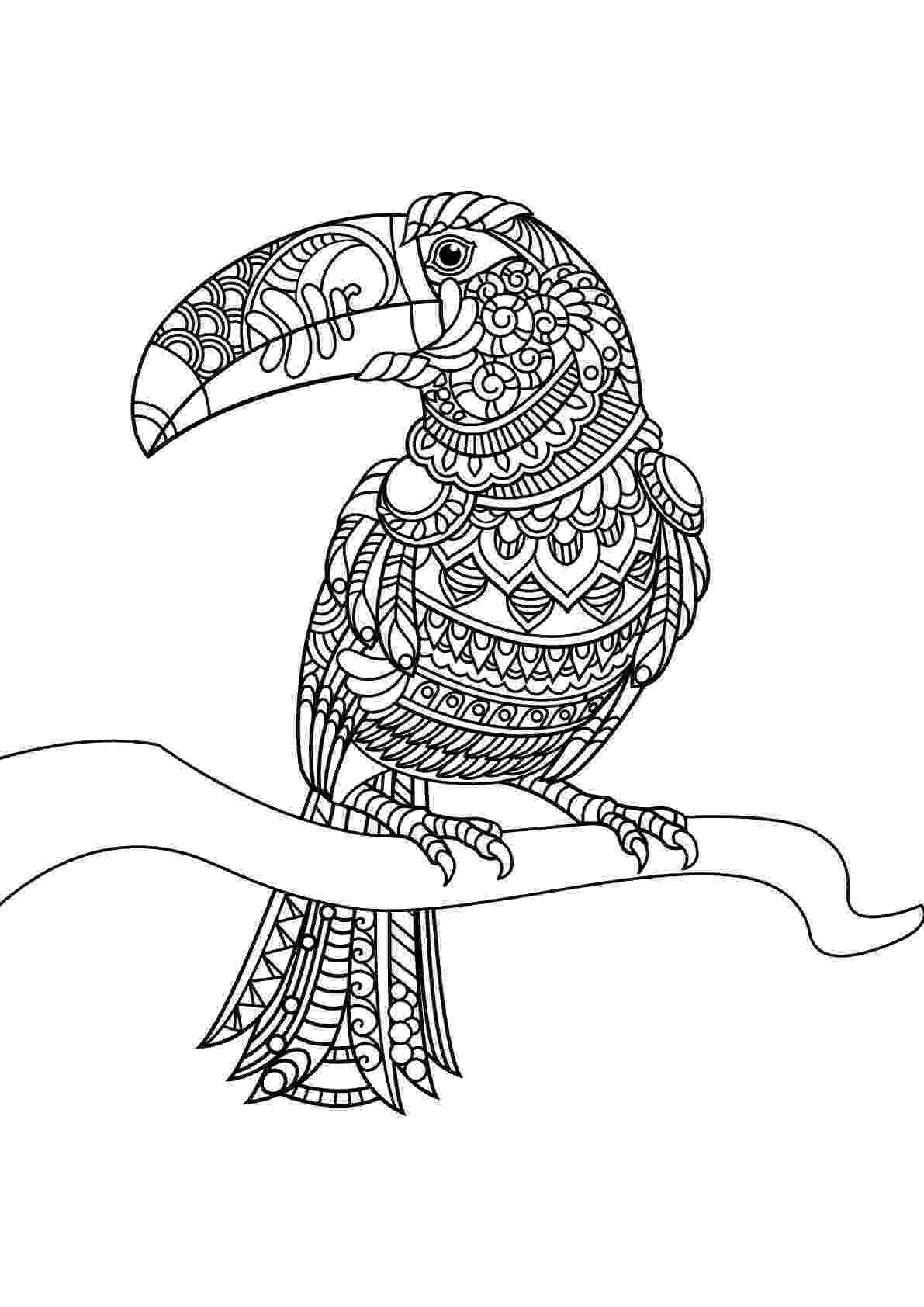 free coloring pages birds bird coloring pages free download on clipartmag coloring pages birds free