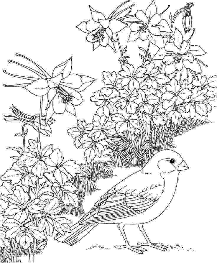 free coloring pages birds birds coloring pages getcoloringpagescom birds coloring pages free