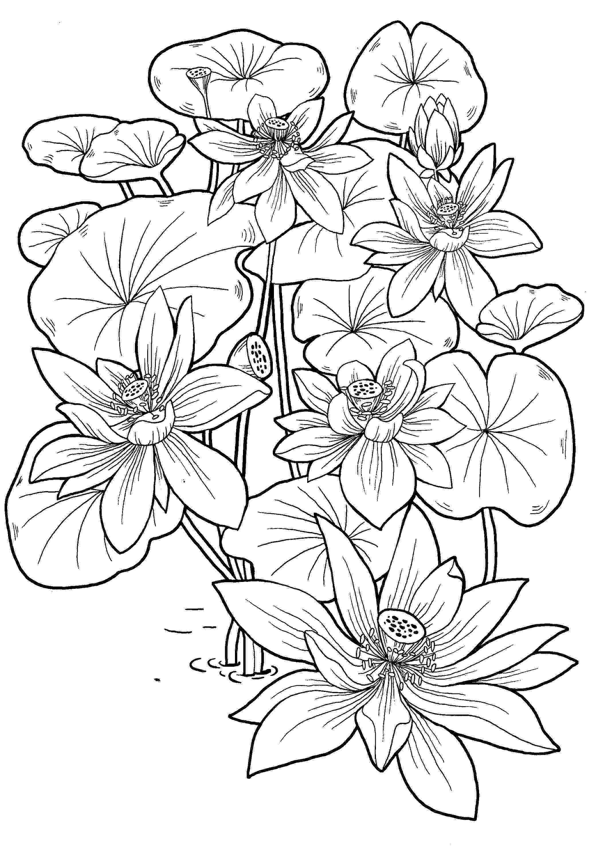 free colouring pages for 10 year olds 4 year old drawing at getdrawingscom free for personal free year for pages colouring olds 10