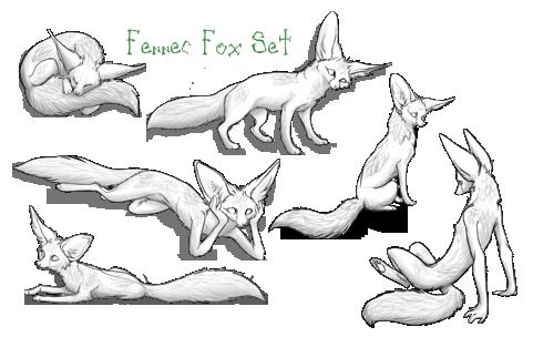 free fennec fox 79 best images about fennec fox on pinterest baby zoo fennec free fox