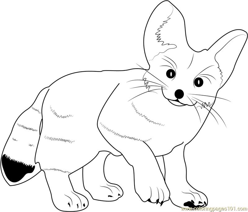 free fennec fox download fennec fox coloring for free designlooter 2020 fox free fennec
