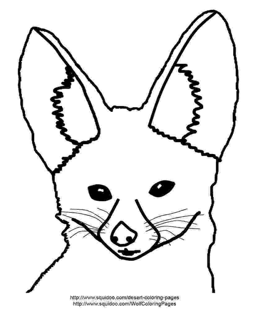 free fennec fox fennec fox illustrations royalty free vector graphics fennec fox free